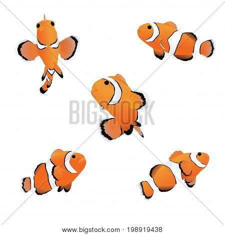Vector illustration set of reef fish, clown fish or anemone fish on white background.