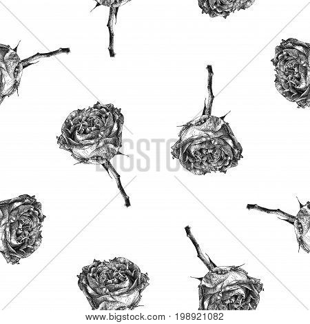 Vector seamless pattern with rose flower isolated on white background drawn by hand. Graphic drawing pointillism technique. Botanical natural collection. Black and white floral illustration