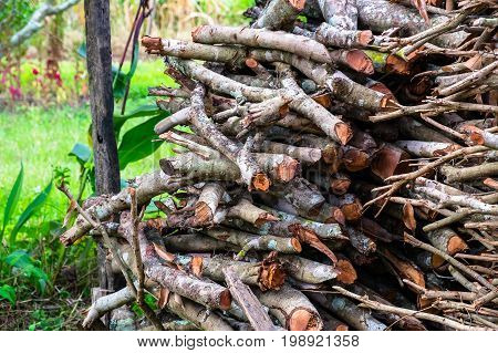 Outdoor storage of many dry Wood for firewood.