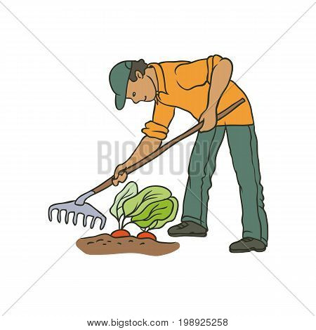 Vector sketch coloured illustration of farmer. Man with rake weeding vegetables. Autumn gardening harvest. Drawn contour cartoon character peasant working in garden. Isolated graphic on white ground