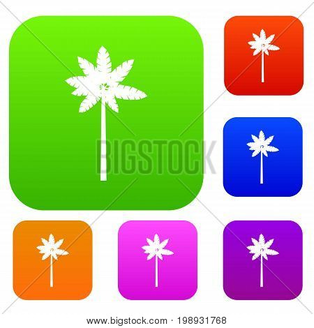 Palm woody plant set icon in different colors isolated vector illustration. Premium collection
