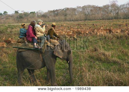 indische safari