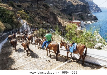 Editorial Santorini, Greece - July 05, 2013: Horses returning from the top of the island of Santorini after carrying tourists up the long and winding pathway, other options are to walk or use the cable car.