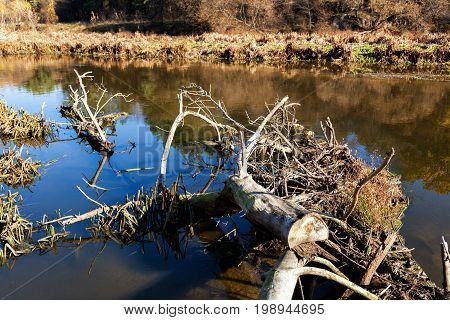 The Trunk Of A Dried Tree Lies In The Water