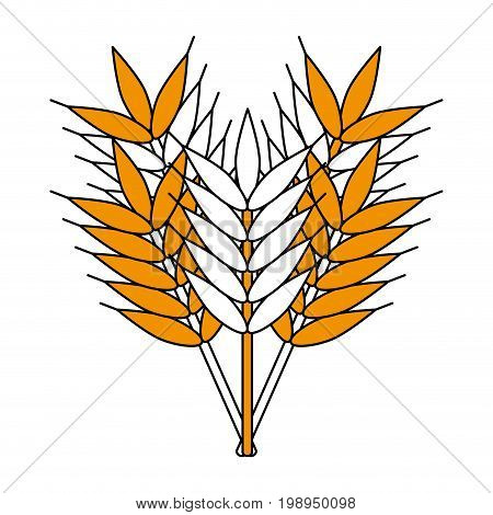 Flat line wheat with a hint of color over white background vector illustration