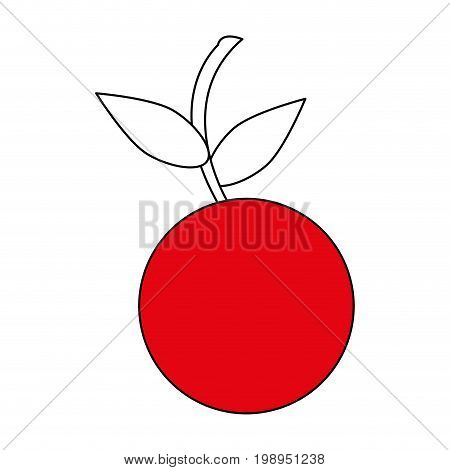 Flat line cherry with a hint of color over white background vector illustration