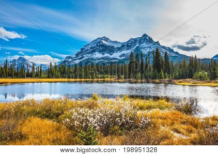 Pine trees reflected in smooth water of the lake. Waterlogged valley in the snowy Rocky Mountains. The concept of ecotourism  and active tourism