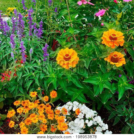 A beautiful background of bright garden flowers