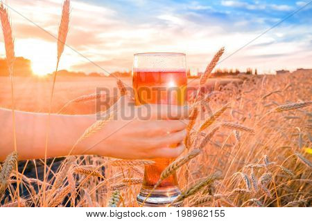 A glass of beer in hand against the background of wheat field during the summer sunset