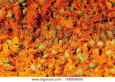 dried flowers of calendula