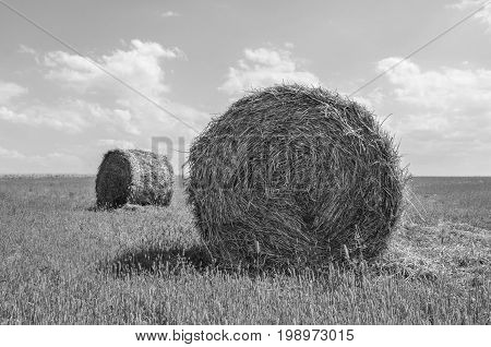 Hay bale in the countryside in gray color.