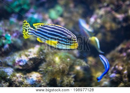 Tropical coral fishes underwater