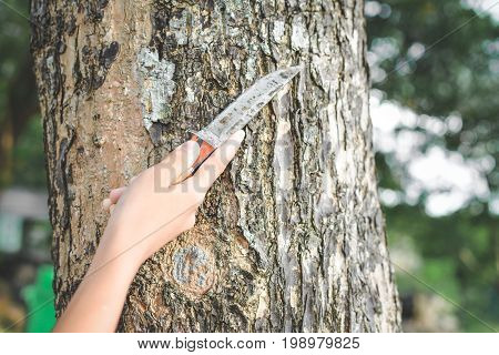 Close up hands holding knife on big tree in forest concept destructive nature