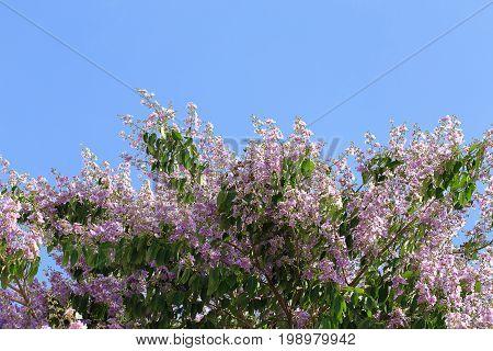 Bungor Tree Flowers