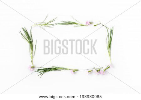Flowers Composition. Frame Made Of Pink Carnation Flowers And Needle-shaped Green Leaves On White Ba