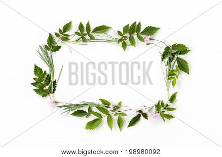 Flowers Composition. Frame Made Of Pink Carnation Flowers And Needle-shaped And Big Astilba Green Le