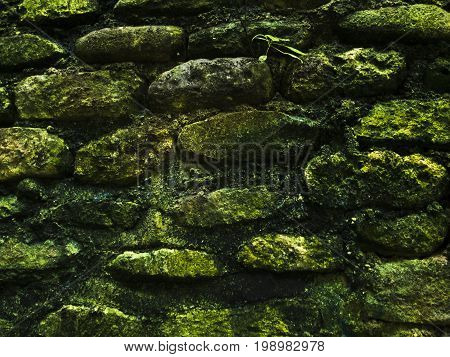 Mossy rustic stone wall closeup photo texture. Rough stone wall of ancient building. Green moss on stone closeup. Old masonry stonewall pattern. Empty wall closeup photo. Protection or safety concept.