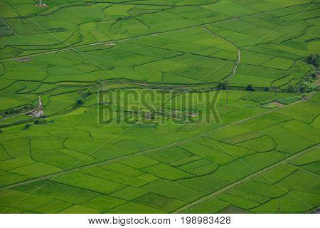 Rice Field At Summer In Northern, Vietnam