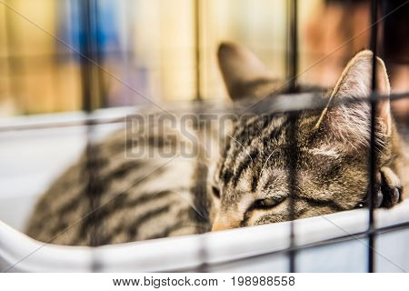 Closeup Of One Brown Tabby Cat In Cage Sleeping Waiting For Adoption