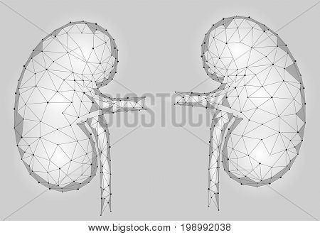 Kidneys internal organ men 3d low poly geometric model. Urology system medicine treatment. Future science technology polygonal geometric gray white vector illustration art