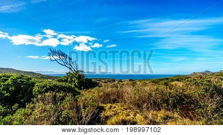 Wind swept tree on Cape of Good Hope Nature Reserve near the southern tip of the Cape Peninsula in South Africa where the Indian and Atlantic Oceans meet