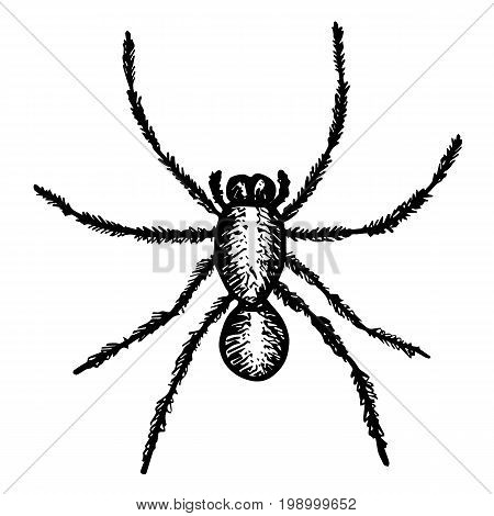 Big black spider closely. Sketch style illustration. Arachnid scary silhouette, fear graphic, animal poisonous design. Nature phobia. Dangerous insect vector.