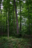 LDS Sacred Grove located in Palmyra New York. poster