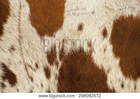 Pattern Of A Longhorn Bull Cowhide.