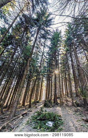 Coniferous Forest And Sun Rays, Klak Hill, Slovak Republic. Hiking Theme. Seasonal Natural Scene.