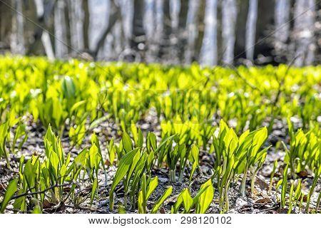 Springtime In The Forest, Klak Hill, Slovak Republic. Seasonal Natural Scene.