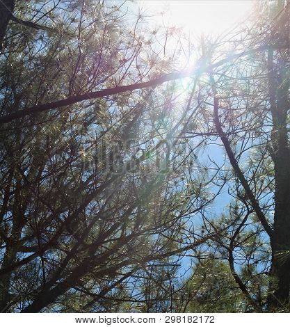 Bright Sunlight Filtering Through The Branches Of Trees On A Beautiful Spring Day.