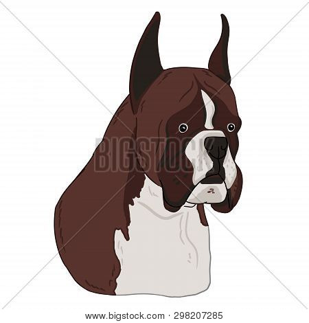 Boxer Dog Animal Cute Face. Vector Illustration Of Cartoon Simple Dog Portrait On White Background.