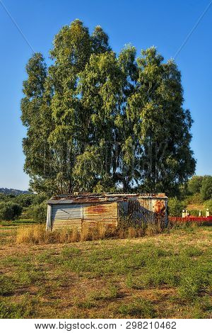 Old Corrugated Iron Cottage In Front Of A Tree