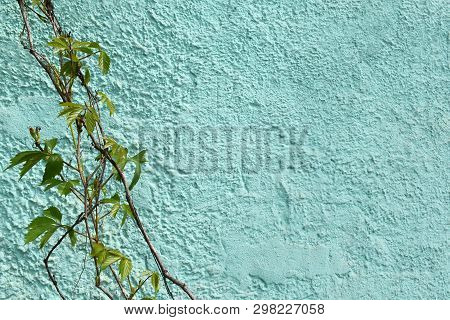 Stock Photo Plants Ivy Vines On Turquoise Textured Old Wall