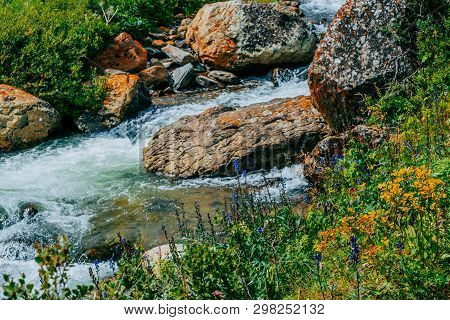 Beautiful warm flowers near mountain creek close-up. Motley grasses near water stream in wilderness in sunny day. Rich flora of highlands. Colorful vegetation of mountains. Vivid plants in sunlight. poster