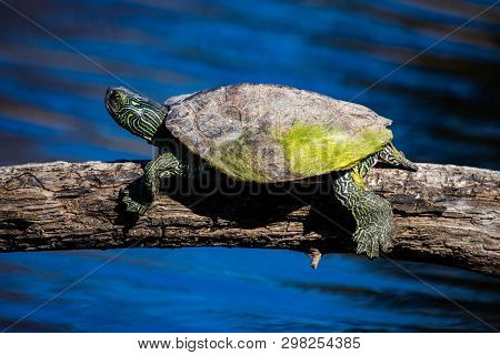 April 22 2019 Windsor Ontario Ojibway Park Wildlife Reptiles Turtles Map Turtle Conservation Status