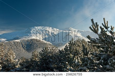 Mountain Summit View Through Tree Winter Landscape Snow Seasonal