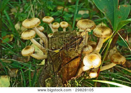 Mushroms In The Forest.