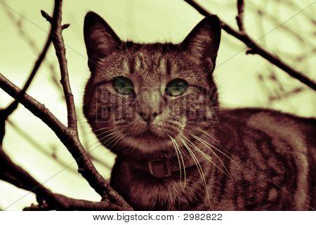 Cat In Tree Gradient Map