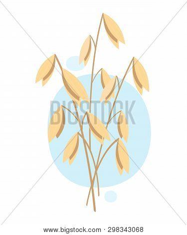 Oats, Plant. Vector Illustration On White Background. Eps 10