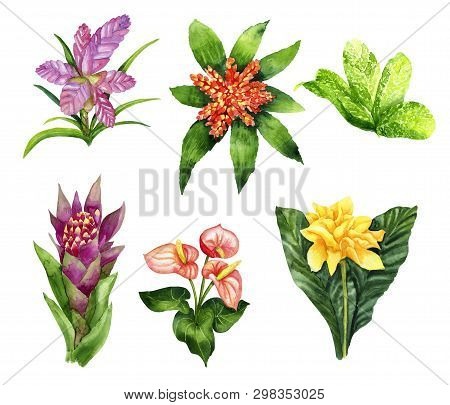 Hand Drawn Set Of Tropical Plants Tillandsia Cyanea, Anthurium, Aechmea, Calathea Saffron, Bromeliac