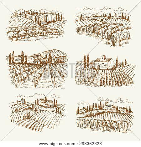 Vineyard Landscape. France Or Italy Vintage Village Wine Vineyards Vector Hand Drawn Illustrations.