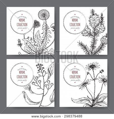 Four Labels With Camphor Laurel, Dandelion, Tea Tree And Arnica Sketch. Green Apothecary Series.