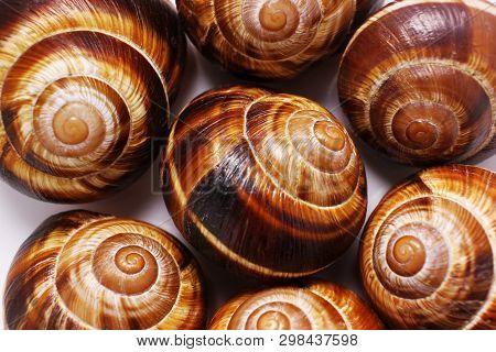 Shell On A White Background, Helix Pomatia Also Roman Snail, Burgundy Snail, Edible Snail Or Escargo
