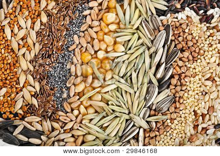 Rye, Wheat, Barley, Oat, Sunflower, Corn, Flax, Poppy, Millet, close up background