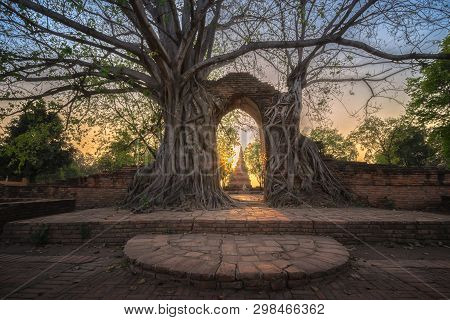 Bodhi Tree Grows On Ruined Wall And Portico Of A Deserted Temple In Wat Phra Ngam, Ayutthaya, Thaila