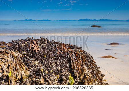 Scenic Sea Coast. Gimsoysand Sandy Beach With Mountains In Horizon.. Nordland County, Lofoten Archip