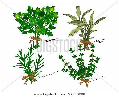 Scarborough Fair Herbs