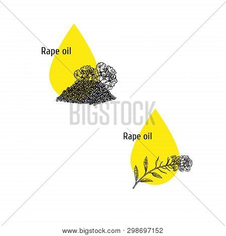 Rape Oil Icons Set. Hand Drawn Sketch. Extract Of Plant. Vector Illustration