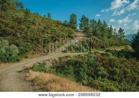 Dirt Roads Passing Through Hilly Terrain Covered By Bushes And Trees, In A Sunny Day At The Highland